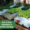 how-to-grow-vegetables-in-garden-soil-bags-square.jpg